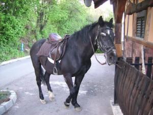 crnko_68